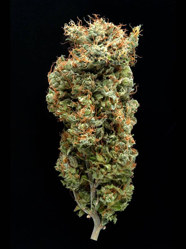 cannabis flower Afghani Mazar-I-Sharif Delta 9 Labs