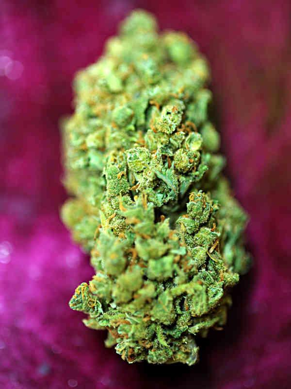cannabis flower Magnum Platinum Haze Delta 9 Labs